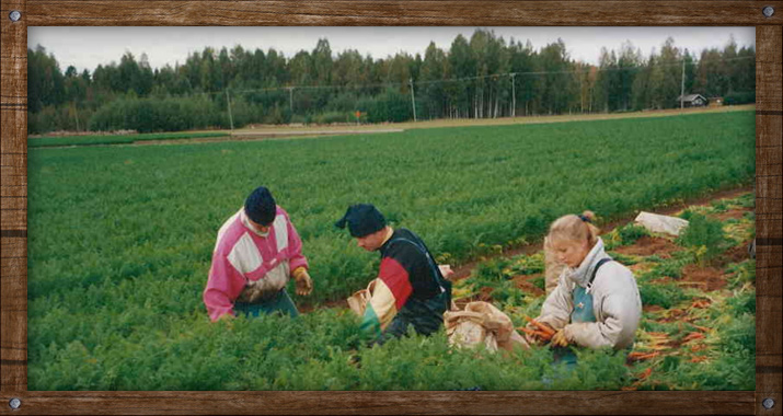 Matti Tuomola Oy
